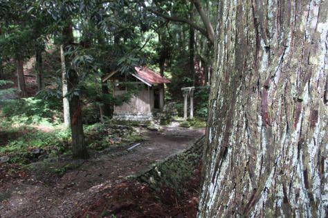 forest12.jpeg